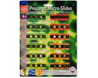 Elenco Electronics Edu-Toys 12 Slide With 36 Assorted Specimens